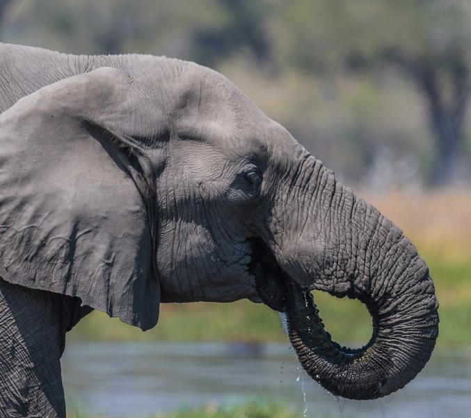 Botswana_June_2017 (2625 of 6179).jpg