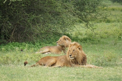 1494239967African-Safari-1.jpg