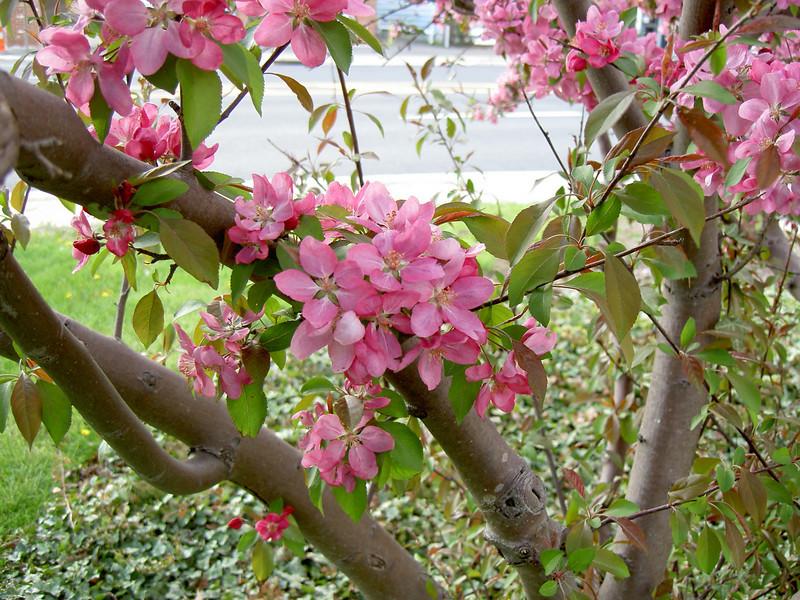 Spring Evening, Smithville, NJ
