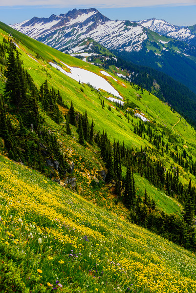 Glacier Peak_7_17 (240 of 290).jpg