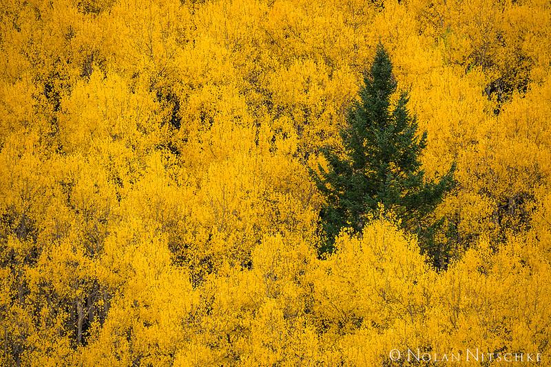zzz (Unknown) - Lone Pine