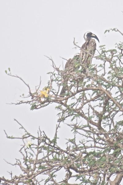 Kenya.Card3.02.2014 148