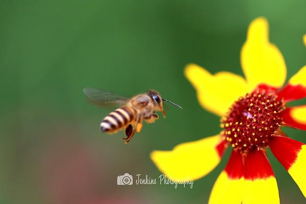 2012-01-24 Sentosa Flowers