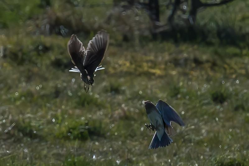 Skylarks positioning