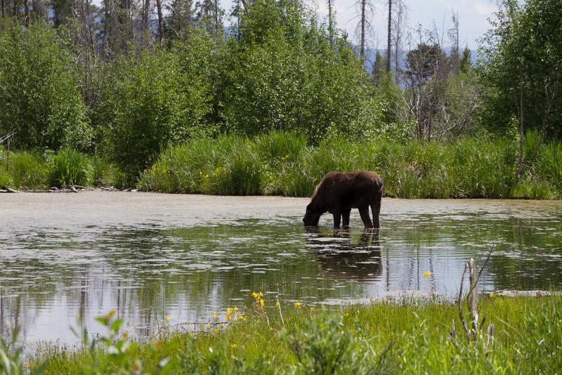 2011_07_05 Wyoming 123.jpg