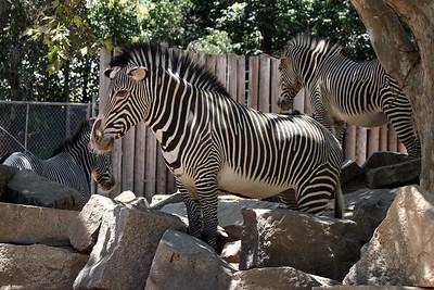 2006 07 At the Zoo
