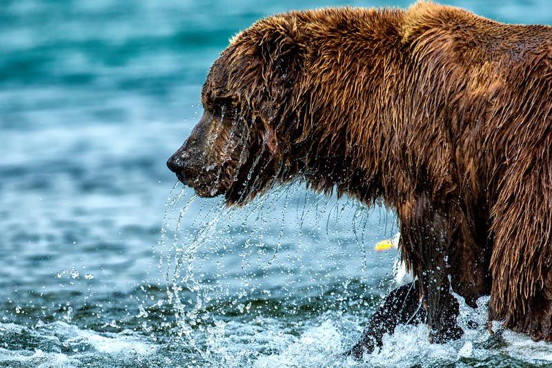 Alaska_2013_IG3A5010.jpg