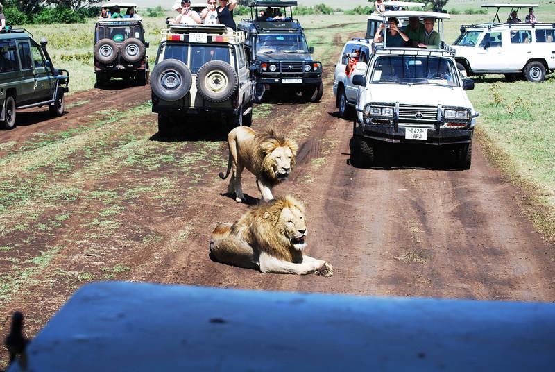 Ngorongoro (135).JPG