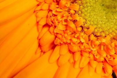 Orange flower closeup. © 2007 Kenneth R. Sheide
