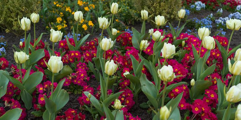 Flowers in bloom in garden, Victoria, British Columbia, Canada