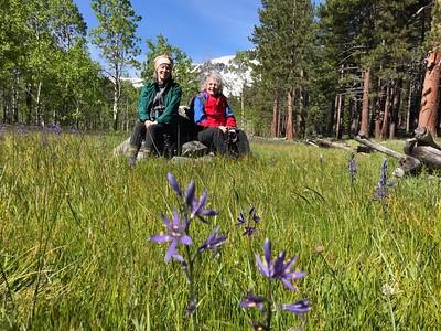 Sierra wildflowers 2019