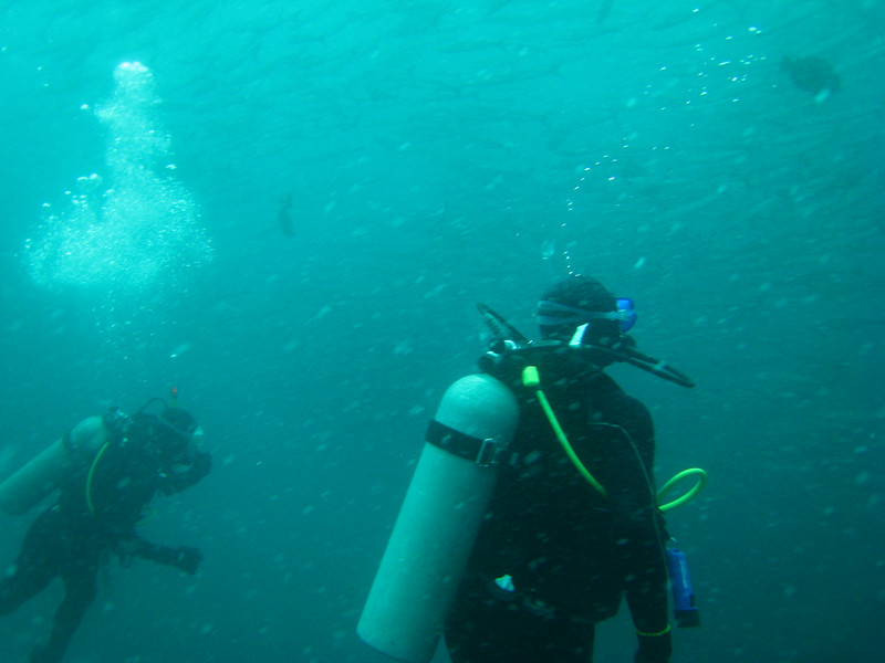 Diving in the Galapagos (255 of 392)