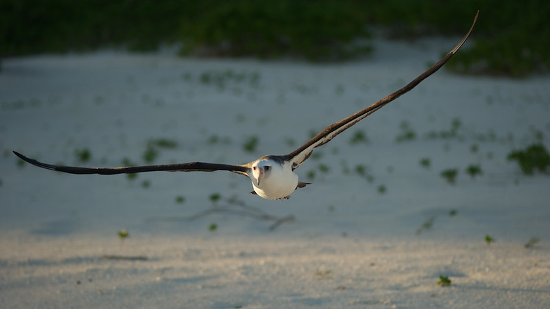 My Morning Albatross - 16 November 2011