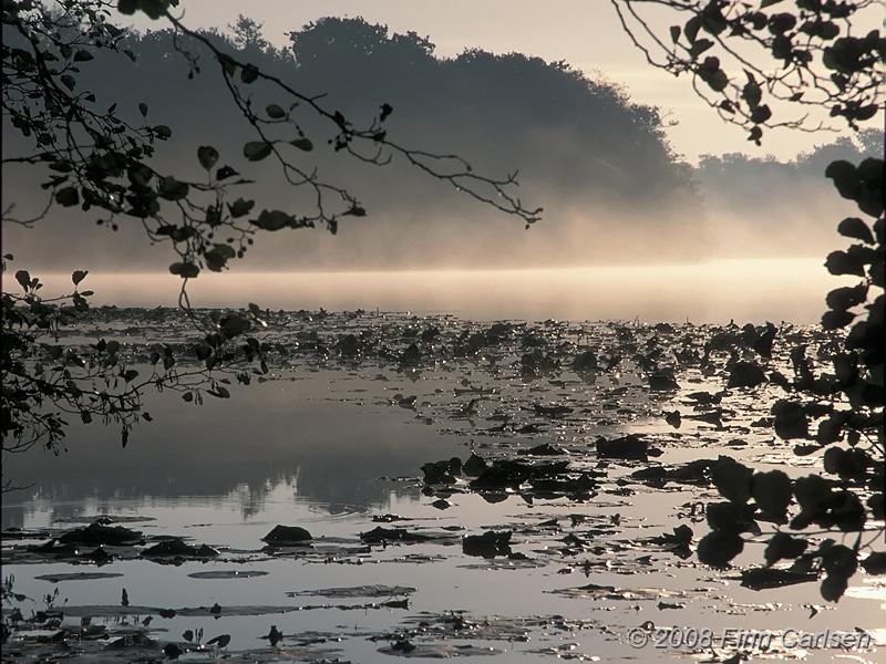 Lyngby sø i morgentåge - 2004