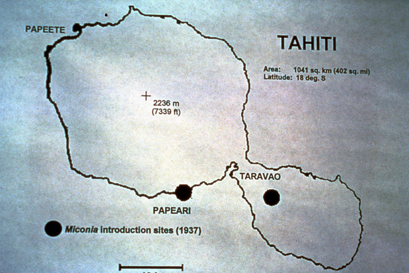 These are the two introduction spots of miconia on Tahiti over 60 years ago.  (photoID: bhg000316)