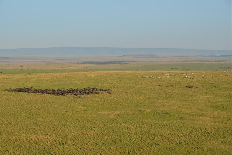 East Africa Safari 206.jpg