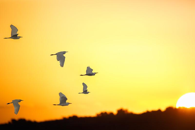 birds flying into sun