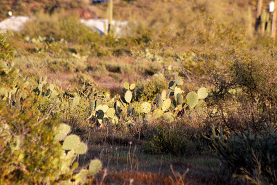 Arizona Spring 2010