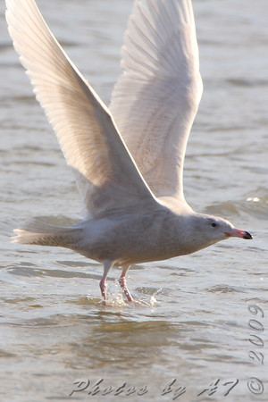 2009-12-03 Riverlands Migratory Bird Sanctuary