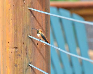 Cabin Birds