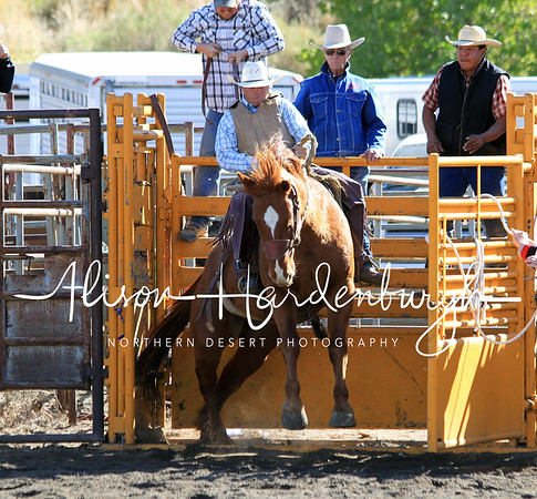 Stock Saddle Bronc ~ Sunday