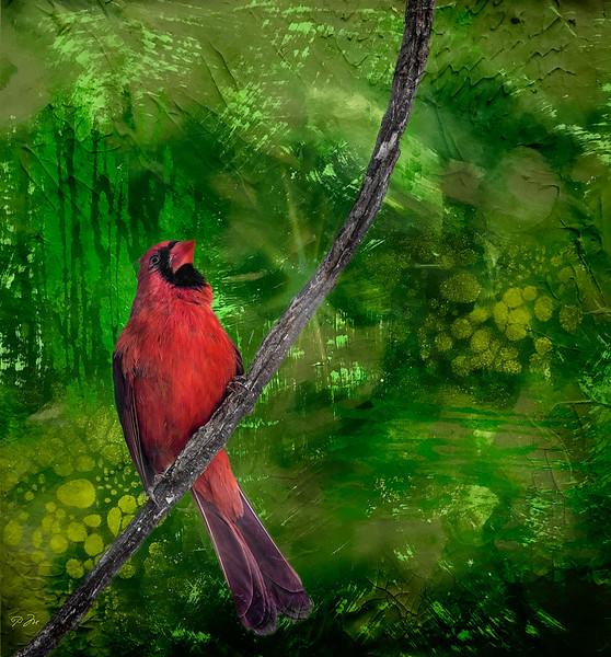 cardinalfantasy_DSC4071.jpg