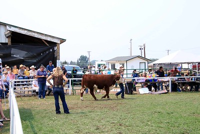 Intermediate Beef Showmanship 2