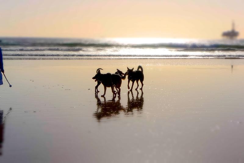 dogs_beach-15.jpg