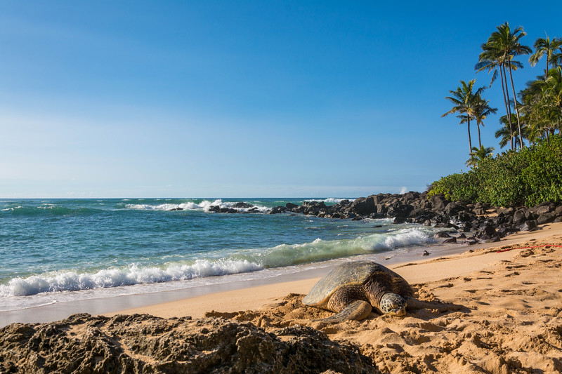 hawaii005.jpg