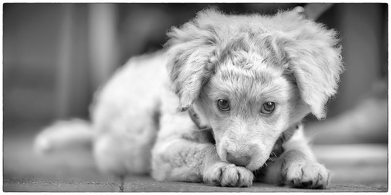 puppymar1317 11.jpg