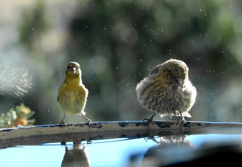 birds (215).JPG