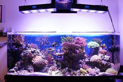My 110gal Reef Tank