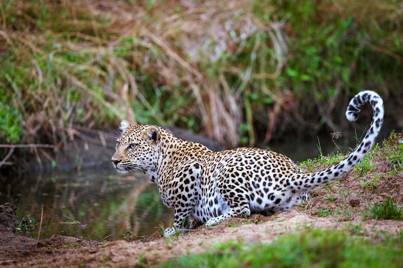 LeopardHills-20191029-2272.jpg