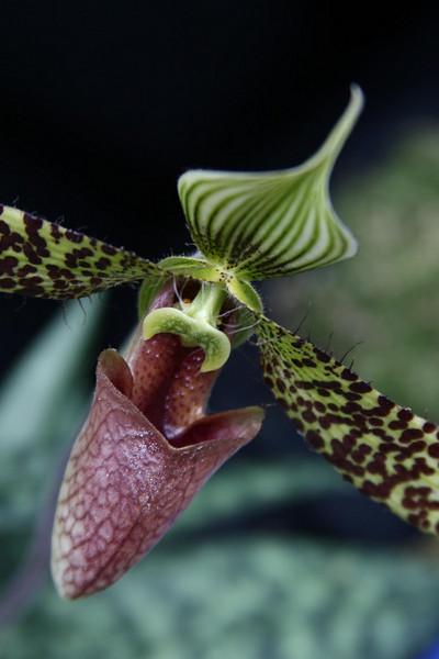 orchids 09 059.jpg