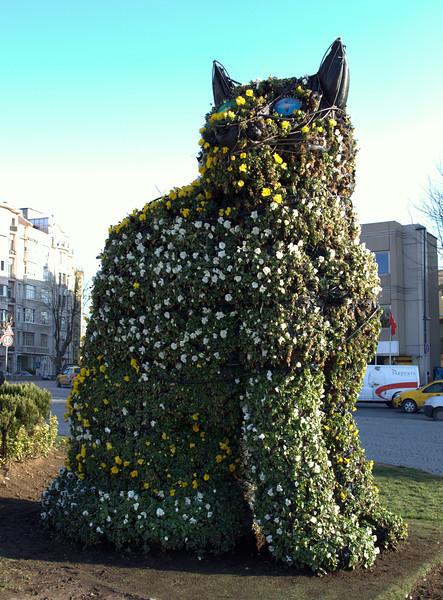 Cat topiary! Note it has heterochromia.