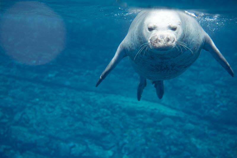 monk seals-15.jpg