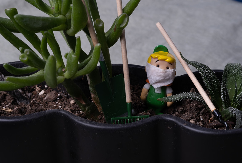 The Wee Gardener