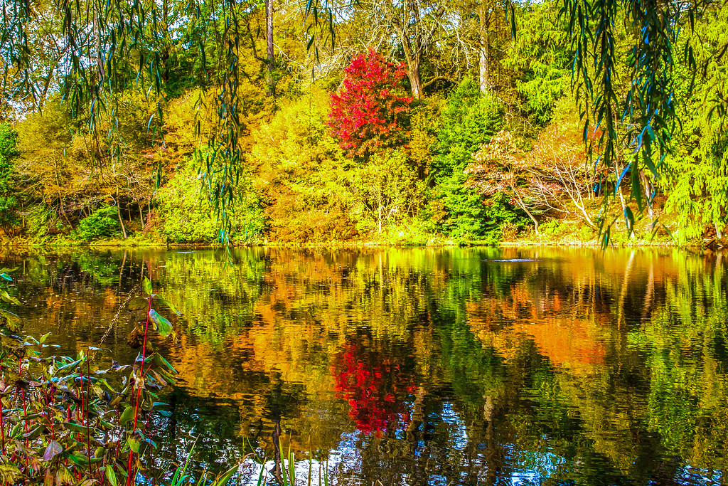 宾州长木公园,秋色斑斓