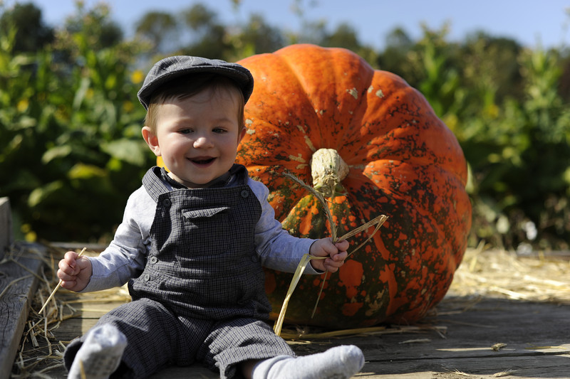 Pumpkin picking at Queen Anne Farm in Maryland