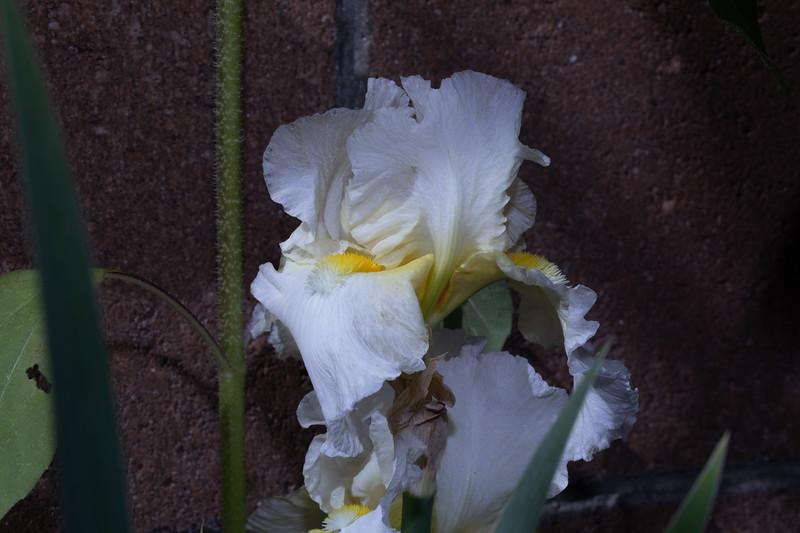 white_flowers2-9726.jpg