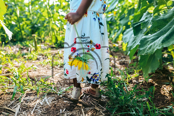 Sunflower Mini 2019