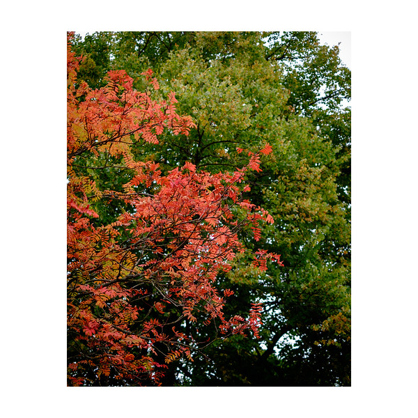 263_AutumnColours_10x10.jpg