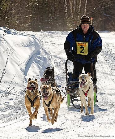 Kearnery Dog Sled Races