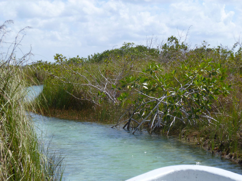 . Navigating the waters of the Sian Ka\'an Biosphere Reserve in Mexico. (Lynn Tobar/Special to the Denver Post)