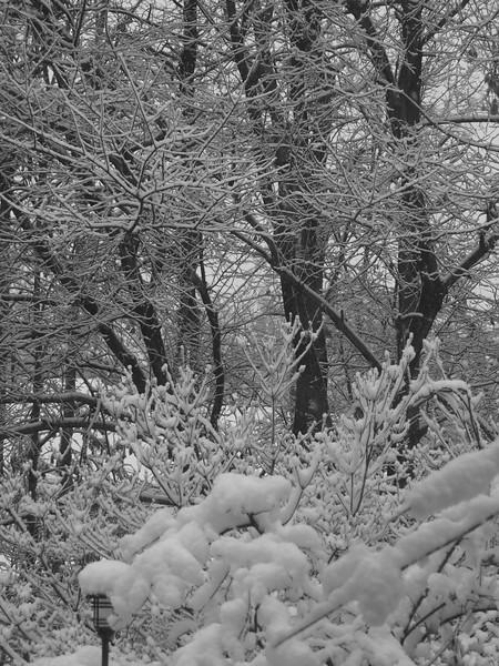 Winter 2015-16