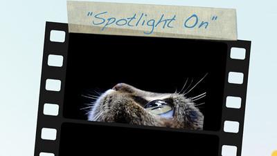 Spotlight On Programing