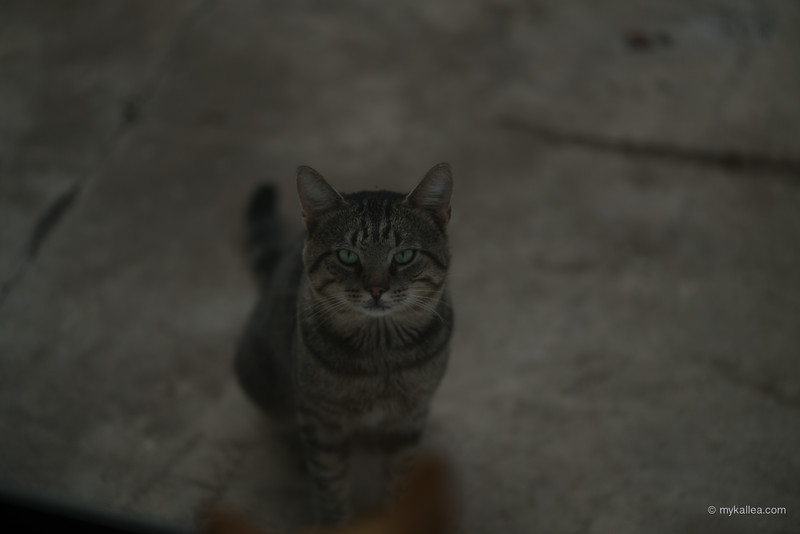 Pets-131.jpg
