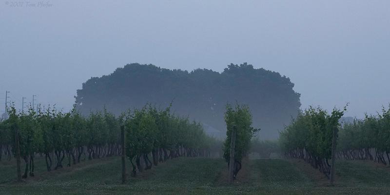 Borghese at Dawn