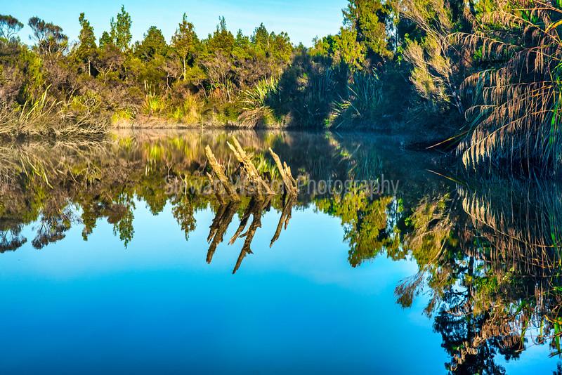 Native bush and tree reflections on a very calm Okarito lagoon on the West Coast