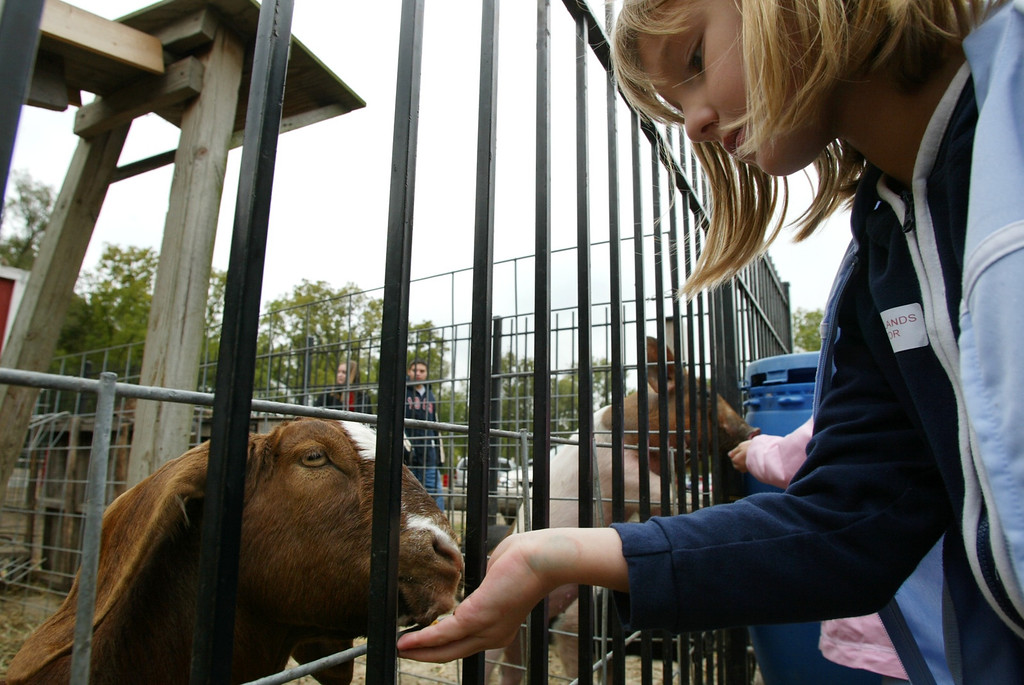 . Lindsey Surmann, 8, of Milford feeds a goat named Willy while visiting Yates Cider Mill in Rochester Hills. Photographed Friday, October 3, 2003.